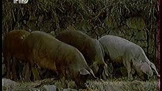 """Диалоги о Животных (1998) """"Ночные разбойники"""" (Генеты)"""