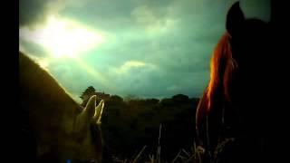 """Dal libro: """"Il potere segreto dei cavalli"""" di Alessia Giovannini"""