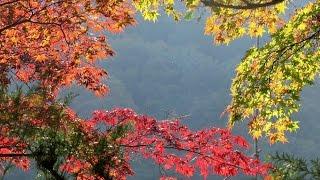 VISIT JAPAN, AUTUMN. (Nikko, Tateyama, Shirakawa, Kyoto, Osaka, Fuji 5 Lakes, Hakone and Tokyo)