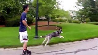 Siberian Husky Vs Rollerblade In A Off Leash Race - Gopro Hero Black 4