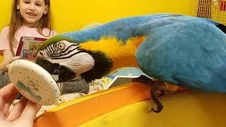 Попугай ара и зеркало