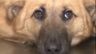 20 случаев отравления домашних собак зафиксировано на территории Люберецкого района