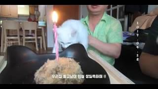 우리집 고양이 희설 축 1살 !!!🎂/ 냥린이시절 모습 영상모음 / 다리짧은 댕댕이 희야 / 댕댕로그 말티즈
