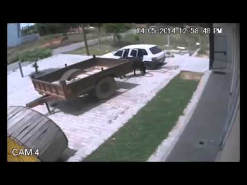 CCTV footage shows cow being stolen in Albania
