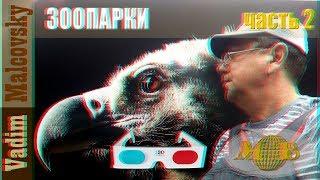 3D stereo red cyan Зоопарк Санкт-Петербурга или видеопрогулка по зоопарку Питера. Мальковский Вадим