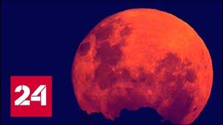Впервые за 150 лет земляне увидят лунное затмение, суперлуние и голубую кровавую луну - Россия 24
