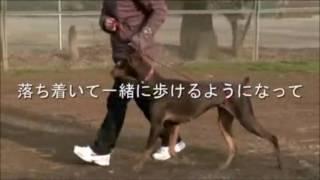 藤井聡の犬のしつけ法。カリスマ訓練士藤井聡が教えるダメ犬脱出!犬の...