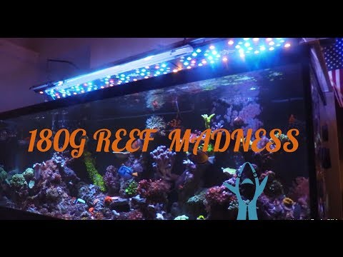 180G REEF SALTWATER AQUARIUM | ALGAE TURF SCRUBBER | CORAL UPDATE
