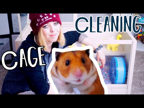 Hamster Cage Cleaning | Syrian Hamster