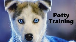 How To Potty Train A Siberian Husky Puppy - Husky House Training Tips - Housebreaking Husky Puppies