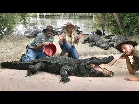 image for Pulling massive Leeches off Gigantic Alligators!  VLOGMAS DAY 17