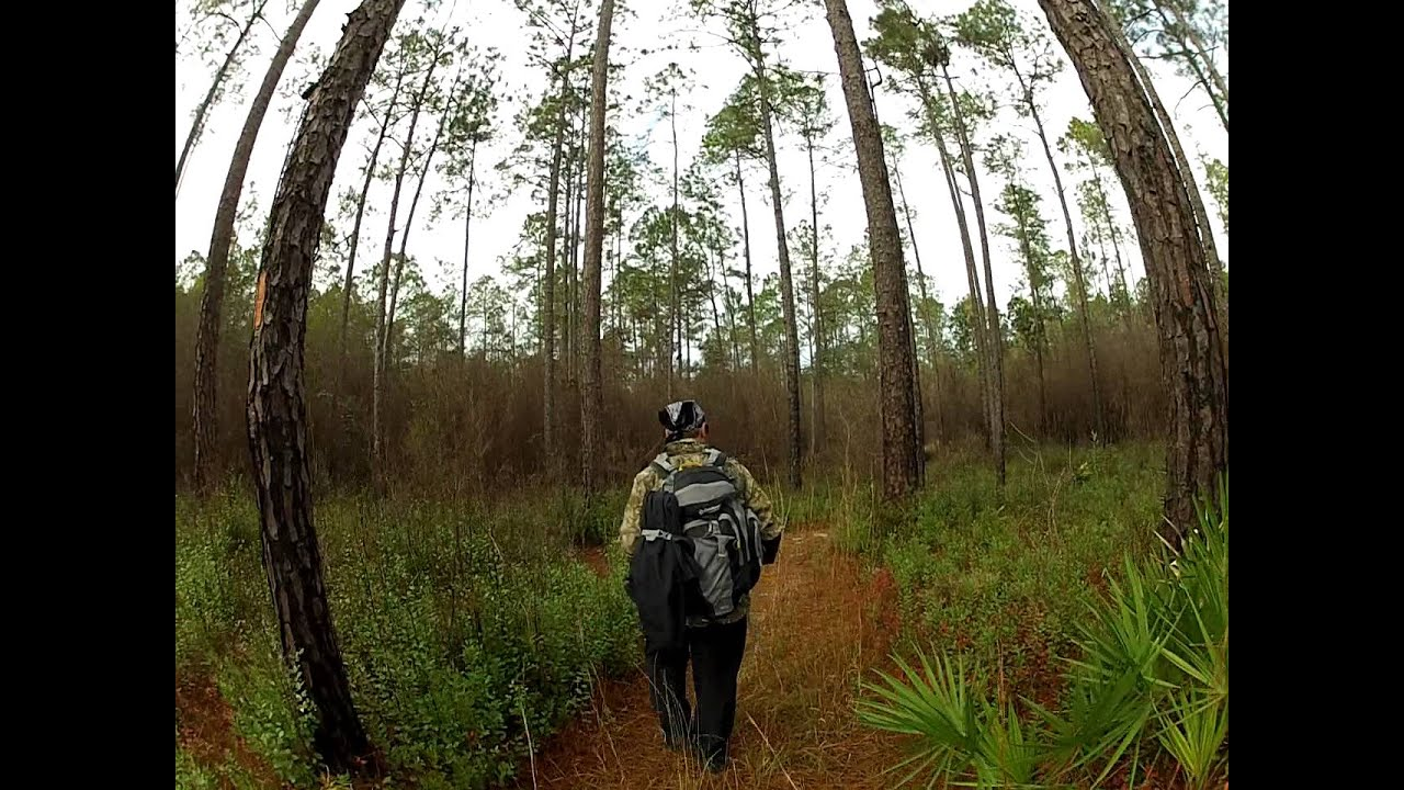 Hiking On The Florida Trail In Apalachicola National Forest