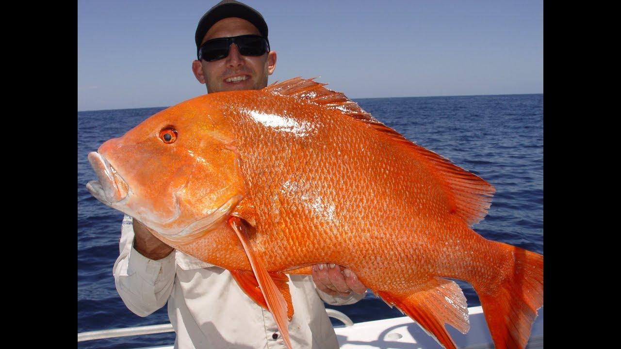 Fraser Island Reds & Reefies