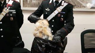 Ladre di lusso a via condotti, fermate dai CC con pellicce nella borsetta