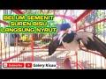 Jalak Suren Gacor Belum Semenit Nyaut Pancingan Super Ampuh  Mp3 - Mp4 Download