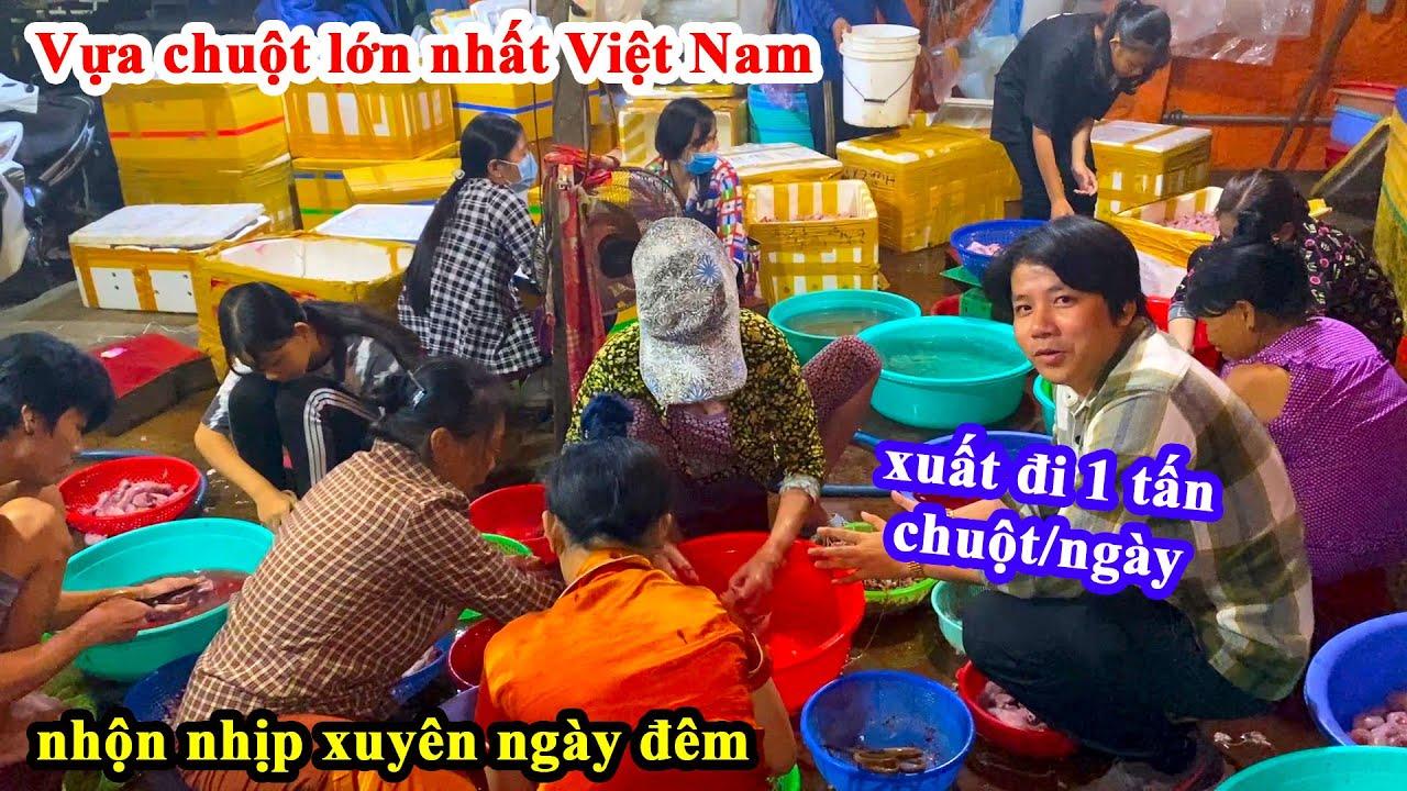 Vựa Chuột Lớn Nhất Việt Nam - Khoa Pug Lần Đầu Ăn Chuột Cống Với Chuột Đồng Khen Nức Nở =))