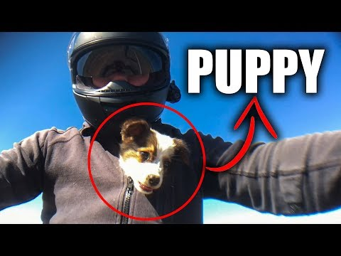 CUTE PUPPY SAVED BY BIKER |  BIKERS ARE NICE |  [EP. 81]