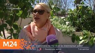 Смотреть видео Манежная площадь превратилась в яблоневый сад - Москва 24 онлайн