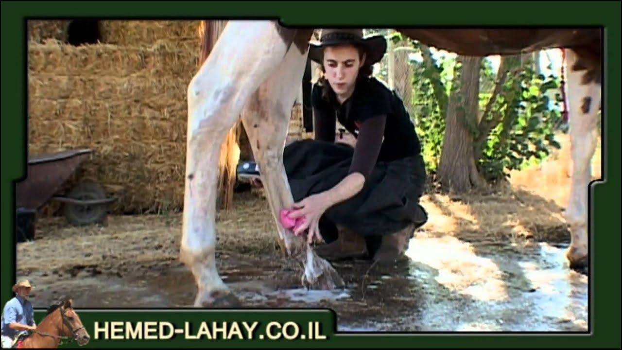 שטיפת סוס