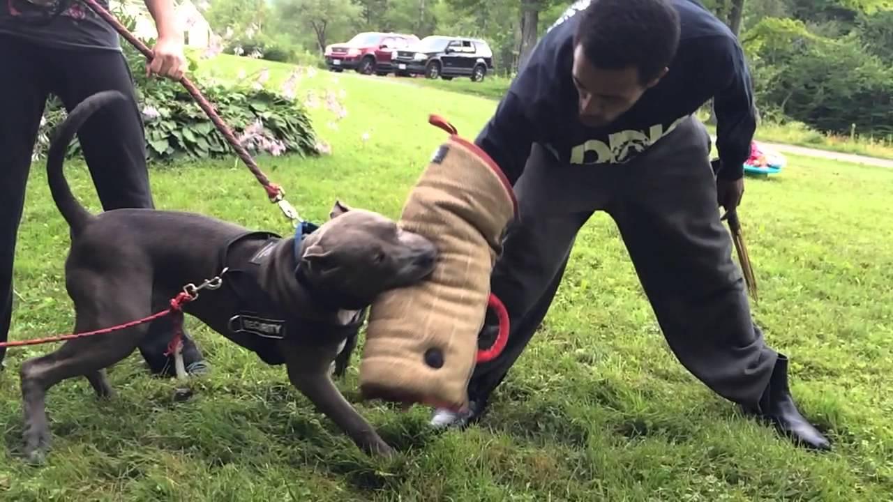 Month Old Dog Biting