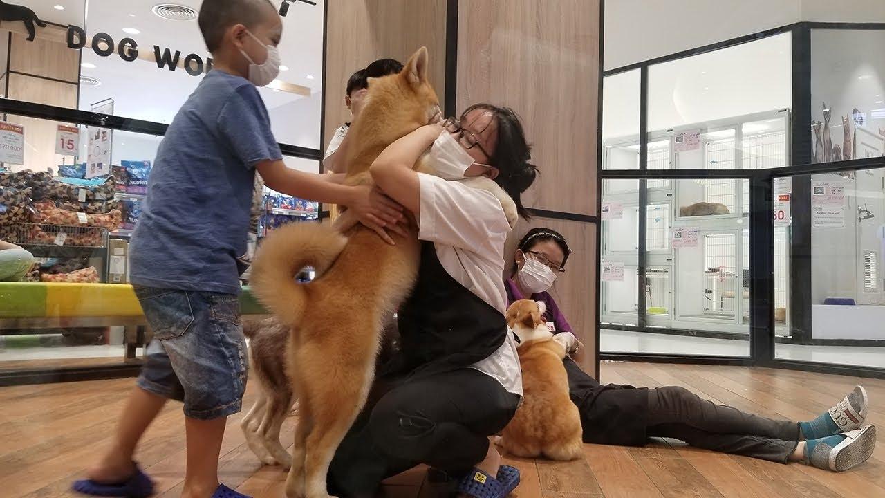 Khó tin siêu thị Nhật bán cặp chó Akita 60 triệu ở Sài Gòn