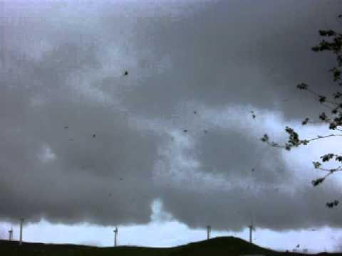 Red Kite Nant Yr Arian