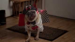 Gary the Pug: Order Takeout Online | Seamless TV Commercial