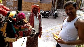 sankranti sambaralu special gangireddu aata in tenali