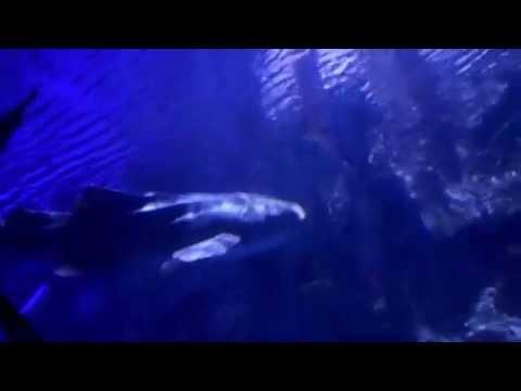 Shark Reef Aquarium At Mandalay Bay,NV