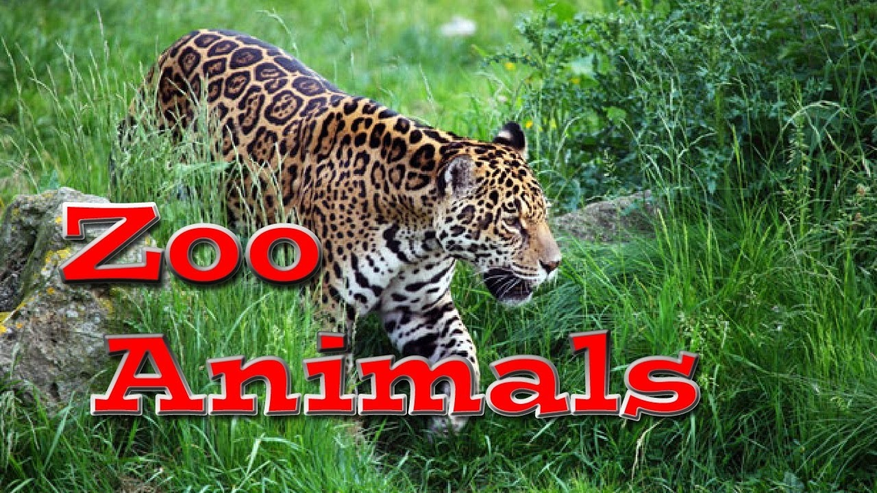 Animal World: Zoo Animals for Kids | Kids Learning Videos ...