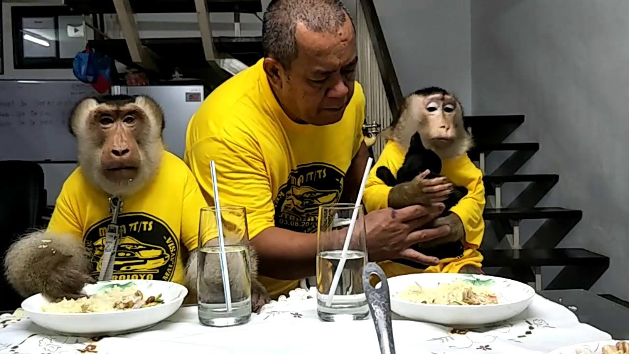 ฝึกลิง ให้นั่งโต๊ะกินข้าว เหมือนคน