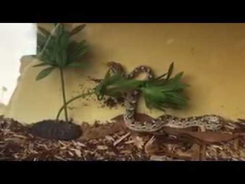 Suffolk County SPCA- Venomous Snake Bites W. Babylon Man