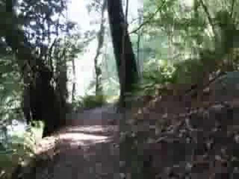 Walking Loeb Park