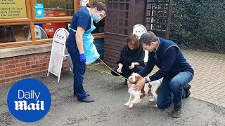 Couple reunited with beloved dog who was stolen six years ago