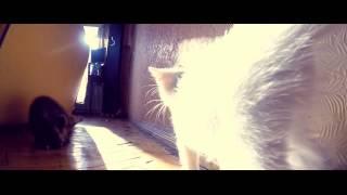 Егоровнычи! Коренная Одесса!) Котята, девочки, белые, 2 месяца.