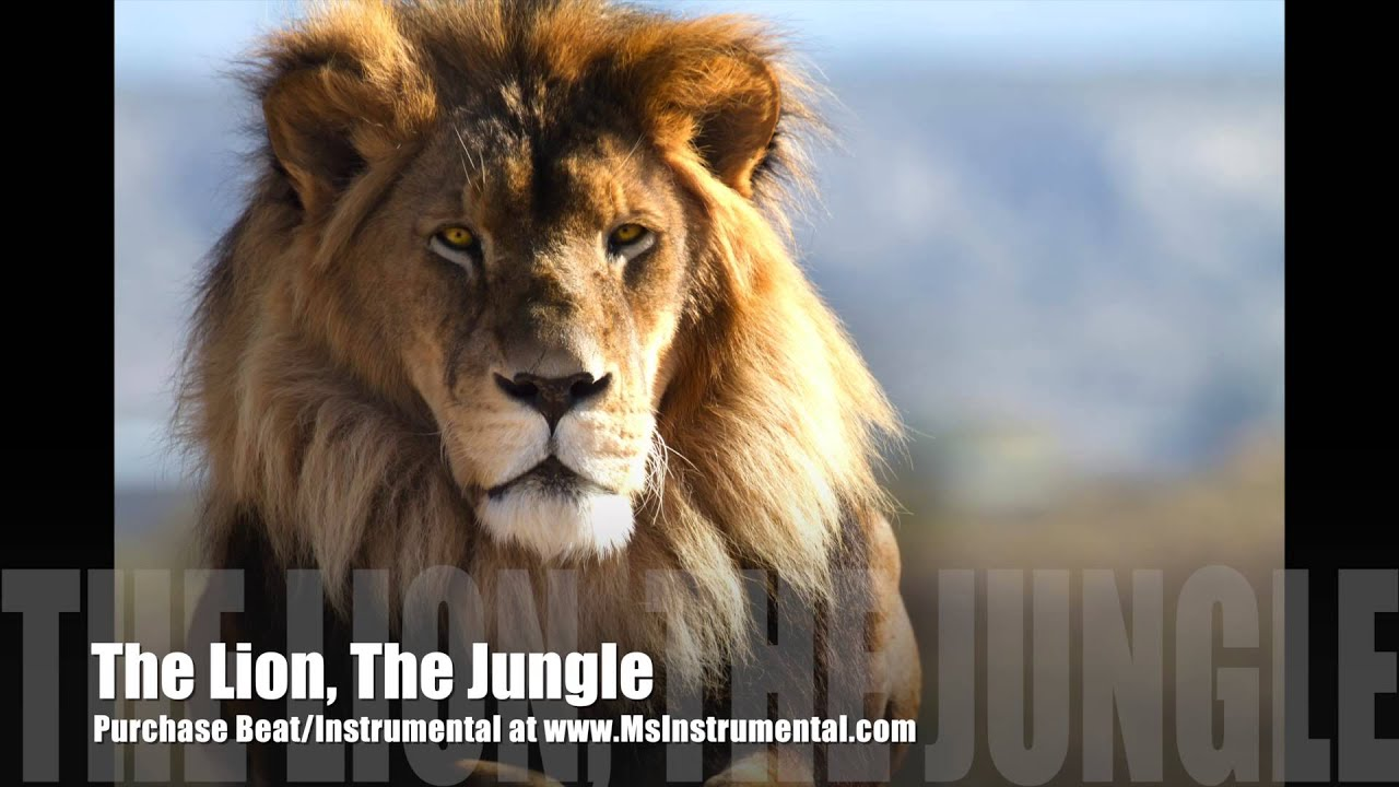 """Instrumental_Beat """"The Lion, The Jungle"""" By MsInstrumental"""