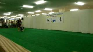 Dog Dance Competition ボーダコリーさくら デモン...