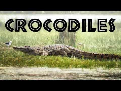 All About Crocodiles for Kids: Crocodiles of the World for Children - FreeSchool