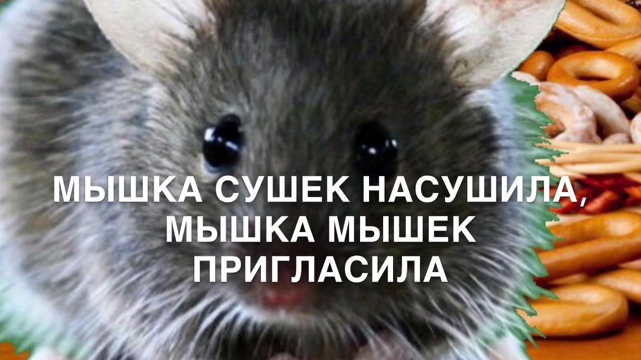 Мышка сушек насушила(распевки для малышей)