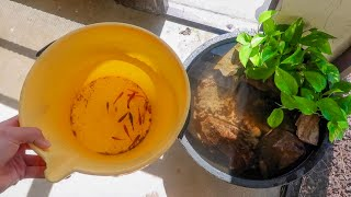 My PATIO BOWL gets NEW *COLORFUL* FISH!!!