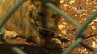 Սիրիայի կենդանաբանական այգու կենդանիները տեղափոխվել են Հորդանան