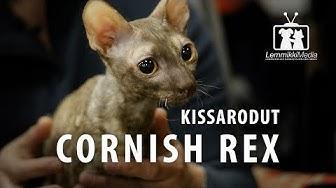 Kissat: CORNISH REX -rotuesittely
