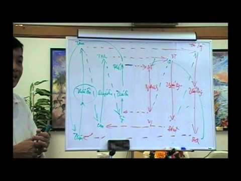 Bài Học Châm Cứu và Mạch Lý - Bài 8c