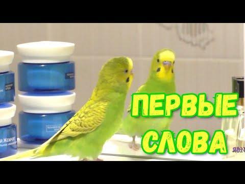 Волнистый Попугай и Зеркало | Разговор с отражением 🤩