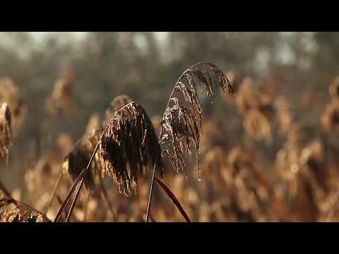 Vidéo 2017 Bande Démo Voix off / Voice Reel Frédéric COURRAUD