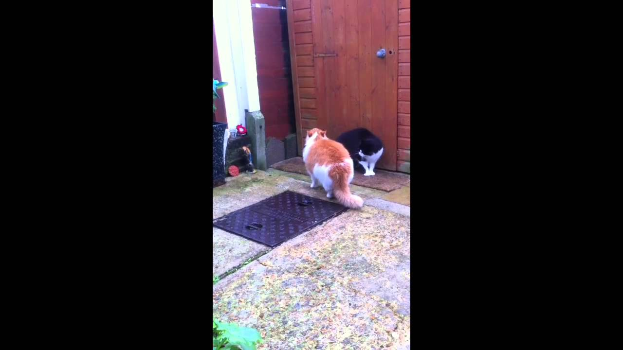 Two Cats Meowing At Each Other Cats Meow Meows Cats