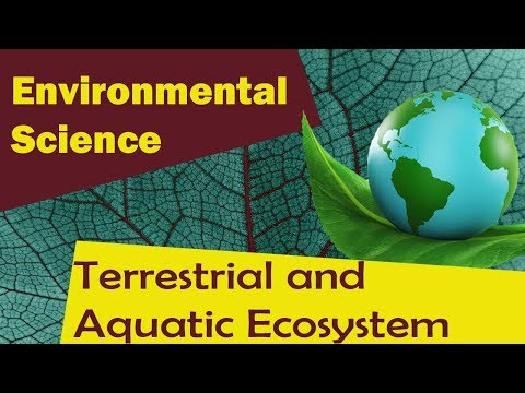 | Terrestrial and Aquatic Ecosystem | - Environmental Science