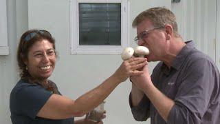 נוהרים לפטריות: החוקרים שמהגרים לגולן בגלל אוסף נדיר