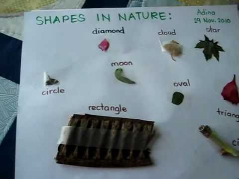 Grade 1 Science Activity Project Collect Nature Objects