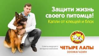 видео Четыре лапы.ру (4lapy.ru) - Интернет зоомагазин | Товары для домашних животных | Обзор официального сайта и отзывы | Купоны на скидку и распродажи